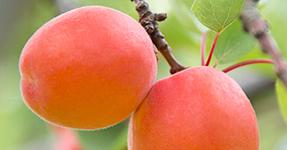 Value Chain Economist – International Development – Plant & Food Research